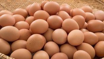 eggs171717