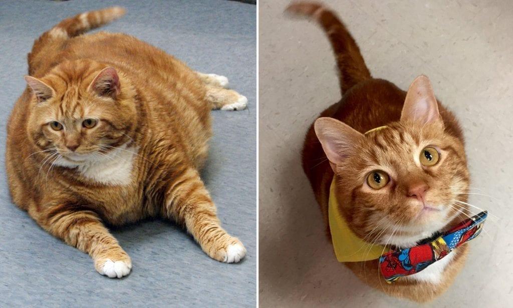 Кот Похудел Весной. Кот плохо ест и худеет: причины, безопасные и опасные симптомы, первая помощь, лечение